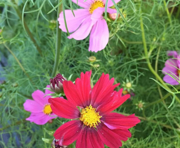 10 Easy to Grow Annuals to use as Cut Flowers in Your Home