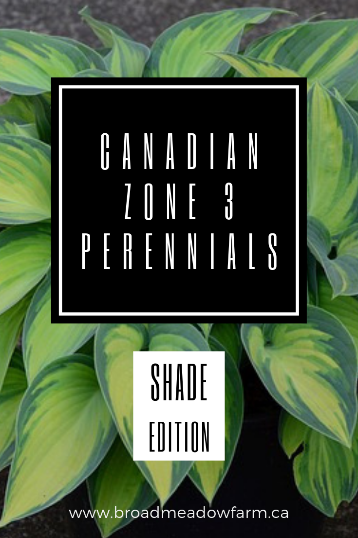 Canadian Zone 3 Full Shade Perennial List
