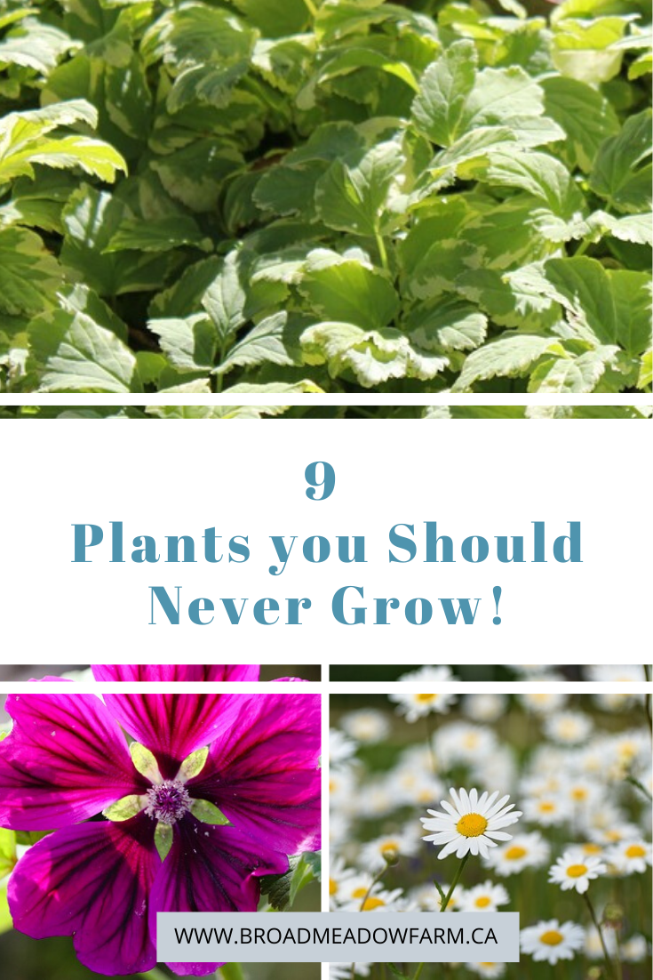 aggressive plants in the landscape, plants to avoid in the garden