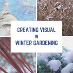 winter visual interest, winterscaping