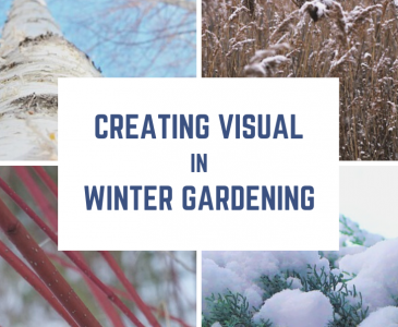 Why you should Landscape for Winter Interest