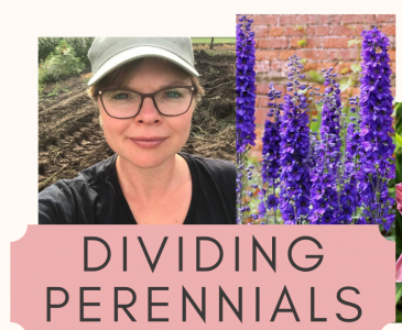 How to Divide and Move Perennials