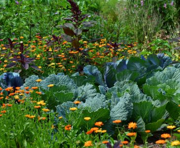 How to Design a Garden – Part 2 All about Plants